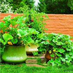 Container Garden for squash/ zucchini perhaps. No more borers...
