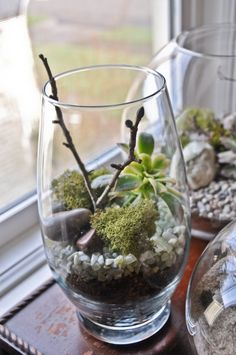 I visited my client's house last week and saw that he had purchased a gorgeous terrarium for his living room. After he told me how much it c...