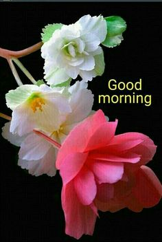 Hope you have a wonderful day! Good Morning Coffee Gif, Good Morning Beautiful Pictures, Good Morning Roses, Good Morning Beautiful Images, Good Morning Inspiration, Good Morning Picture, Morning Pictures, Beautiful Days, Beautiful Gif