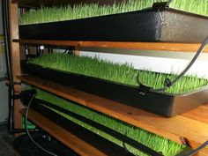 With a hydroponics system you can produce a great number of grasses for fodder. Within 6-10 days from seed to grass to feed for your livestock.