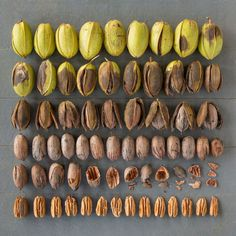 Emily Blincoe creates beautiful photos of everyday objects and food based on size, shape and color. Check out her photos of everyday objects arrangements. People With Ocd, Texas Pecans, Things Organized Neatly, Collections Of Objects, Recipe Organization, Arte Floral, Everyday Objects, Food Design, Fine Dining