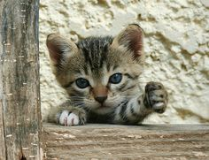 stray kitten (Greece, by Roeselien Raimond ) ♡... Re-pinned by StoneArtUSA.com ~ affordable custom pet memorials for everyone.