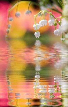 .dewdrop ovr water