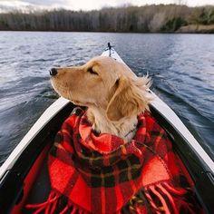 That's one good looking doggo! - Imgur
