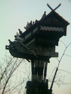 endemic pigeons of Indonesia on their home... #dovecote #pigeonhouse #بيت_الحمام #برج_الحمام