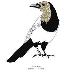 Maartje van den Noort - Hollandse vogels - De gulle ekster