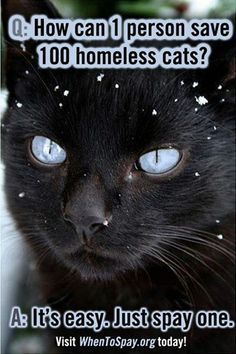 """This is so true. Get your g-dang cat spayed. """"Homeless"""" cats are terrible for the environment."""
