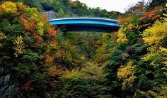 高野山と龍神温泉を結ぶ高野龍神スカイラインを見上げたところです。紅葉に鮮やかなライトブルーが似合っているかどうか気になるところです。
