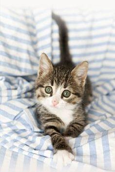 Cutie kat