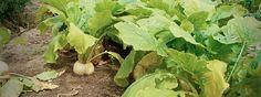 Cultivo de tejidos vegetales, estrategia para la conservación de especies