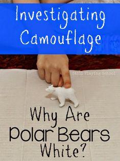 Why Are Polar Bears White? A Preschool Investigation