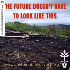 #Repost @sustainableharvestintl with @repostapp.  Its...