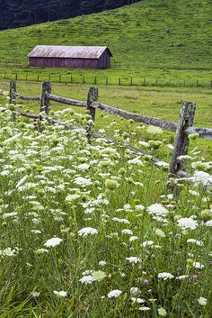 Red Barn and Queen Anne's Lace #2 by Rob Travis, via Flickr