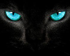Pretty blue eyes | Cat