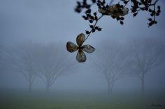 Les bleus au coeur...   Flickr - Photo Sharing!