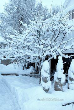 Winter wonderland! :)) A glimpse of my garden in winter! ;) Photography by Ann, Glassveranda. http://glassveranda.blogspot.com/