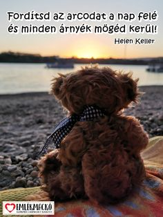 Fordítsd az arcodat a nap felé és minden árnyék mögéd kerül! (Helen Keller) Helen Keller, Mac, Teddy Bear, Animals, Animales, Animaux, Teddy Bears, Animal, Animais