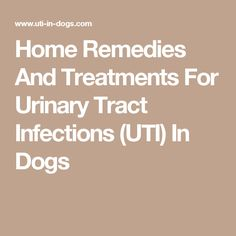 Home Remedies And Treatments For Urinary Tract Infections (UTI) In Dogs