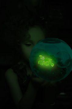 champignon bioluminescent veilleuse biomimétisme substrat science et art
