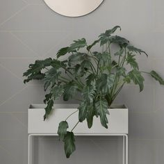 Planter box on narrow entryway wall with beautiful flower/plant arrangement inside (alternative to console table)