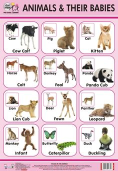 images of names of animal parents and their babies | Description/ Specification of Animal and Their Babies Chart