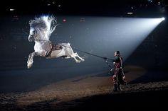 Performance d'un magnifique Lipizzan     Spansih Riding School of Vienna