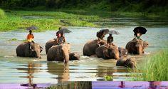 Parque Nacional de Chitwan ( Nepal )
