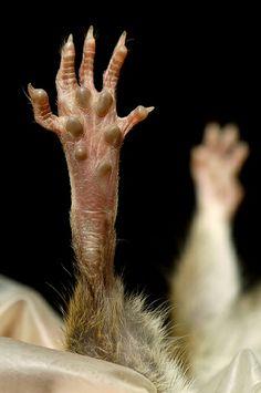 A rat paw.