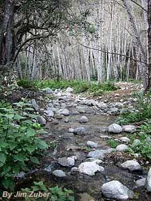 Arroyo Seco Trail - 10m