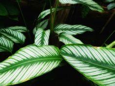 Le piante d'appartamento soffrono spesso della carenza di luce. In realtà non è sempre così, ci sono infatti alcune piante che non richiedono una alta lumi