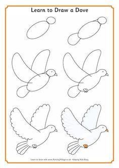 Learn to draw dove