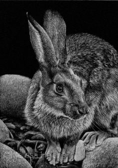 The wildlife + wild place artwork by Central WI based artist, Melissa Helene. Artwork by request and commission. Rabbit Sculpture, Scratchboard Art, Black And White Artwork, Scratch Art, Rabbit Art, Wildlife Art, Animal Drawings, Pet Portraits, Les Oeuvres