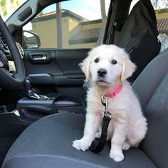 Little girl is eager to learn how to drive.