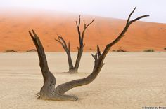 Find Tree Skeletons Deadvlei Near Sossusvlei Namibia stock images in HD and millions of other royalty-free stock photos, illustrations and vectors in the Shutterstock collection. Thousands of new, high-quality pictures added every day. Painting Inspiration, Landscape Photography, Photo Editing, Royalty Free Stock Photos, Gallery, Places, Illustration, Pictures, Image