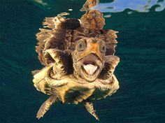 Drôle d'angle pour cette gentille tortue qui avec son reflet devient un animal un peu moins sympa.