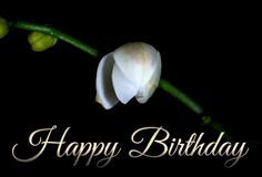 happy-birthday-blooming-white-orchid-card-animated-gif.gif (500×339)