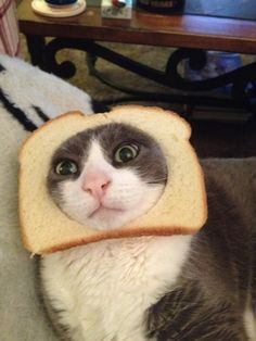 breaded cats / cat breading  ................................... oh yes, apparently.
