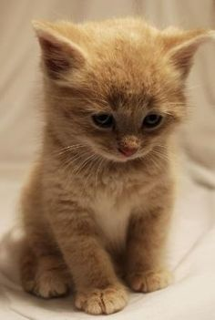 #kittens by hellowordone