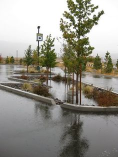 stormwater parking lot island - Google Search