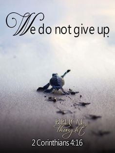 2 Corinthians That is why we never give up. Though our bodies are dying, our spirits are being renewed every day. Turtle Quotes, Sea Turtle Pictures, Epic Quotes, Motivational Quotes, Encouraging Thoughts, Healing Words, Spiritual Encouragement, Spiritual Thoughts, Bible Truth