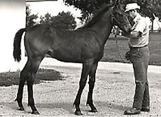 Seattle Slew was foaled on February 15, 1974 at Ben Castleman's White Horse Acres Farm near Lexington, Kentucky. Sired by Bold Reasoning out of the Poker mare My Charmer, Seattle Slew was a beautiful dark brown colt with a small white patch of hair by his left rear hoof.