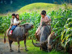 Agence de voyage au Vietnam est un spécialiste du voyage surmesure au Vietnam, au Cambodge et au Laos