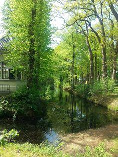 Overcinge. Havelte #Netherlands