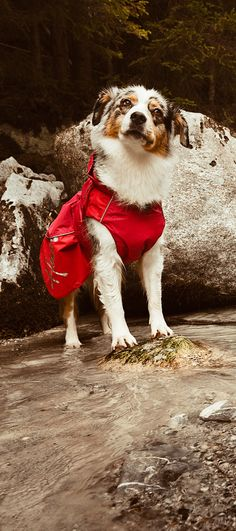 The Dog Raincoat keeps your pet's chest and abdomen warm and dry on wet, rainy days.