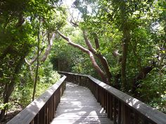Gumbo Limbo Nature Trail (Boca Raton, Florida)