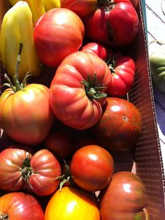 Aug. 7 -- Another great harvest at Our Garden.