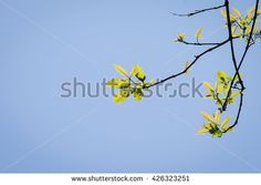 Young leaves with blue sky in the background