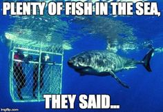 Shark Diving in Cape Town, South Africa A Tourism Controversy Great White Shark Diving, Oh The Places You'll Go, Places To Visit, Shark Cage, Destinations, Cape Town South Africa, African Safari, Africa Travel, Vacation Spots