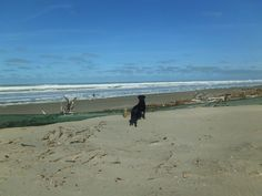 Belle thinking it's a typically busy day on Waikuku Beach. 07MAR2014. RJP