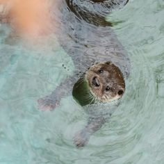 Oh Otter!!